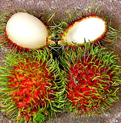 Eating Rambutan